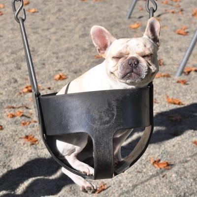 hubertthelittlebulldog