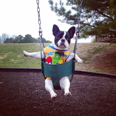 milesthefrenchbulldog